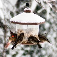 Dokarmianie ptaków!
