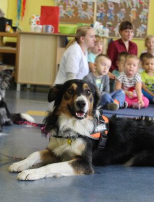 Pokaz psów ratowniczych