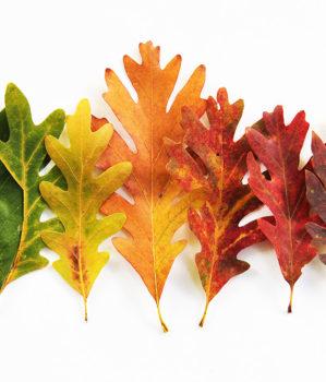 Ogłoszenie – jesienne liście