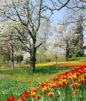 Wiosna – malowana stopami i rękami