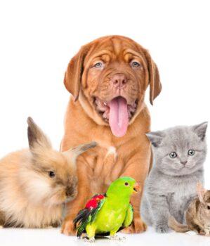 Wystawa zwierząt domowych